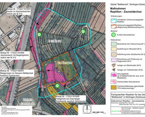 zoologisches Gutachten NT Bettlesried Planungsmaßnahmen