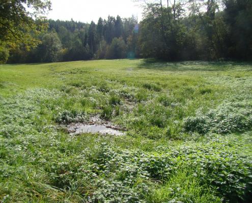 Feuchtwiesenkartierung Filderstadt-Bonlanden
